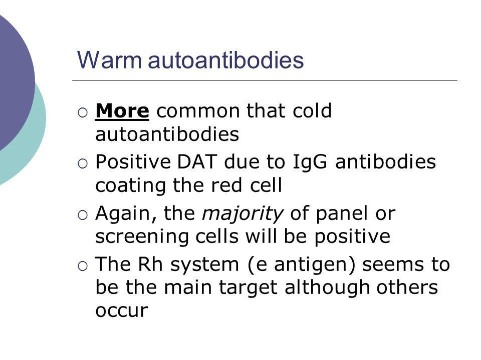 Warm autoantibodies More common that cold autoantibodies Positive DAT due to IgG antibodies coating the red cell Again, the majority of panel or scree