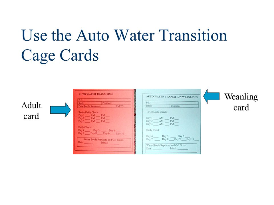 Use the Auto Water Transition Cage Cards Weanling card Adult card