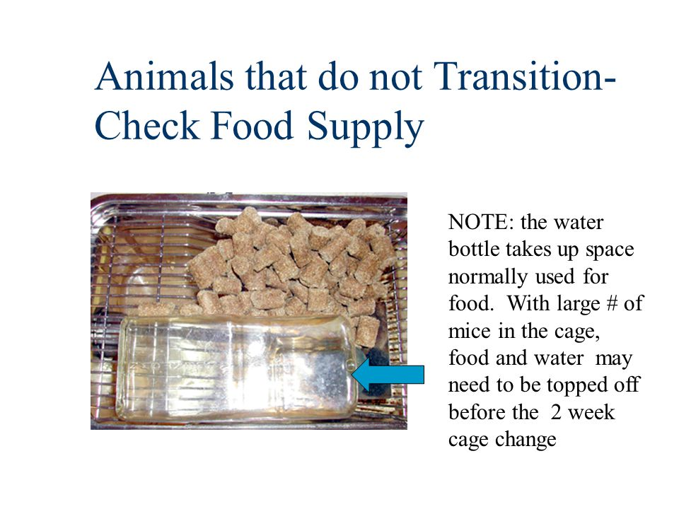 Animals that do not Transition- Check Food Supply NOTE: the water bottle takes up space normally used for food.