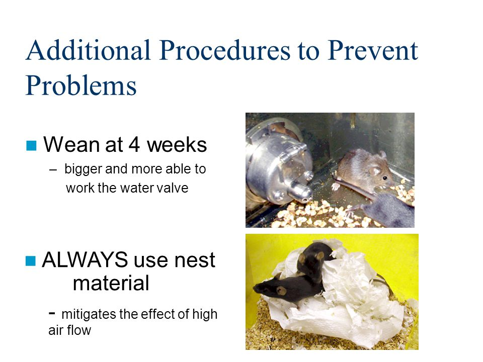 Additional Procedures to Prevent Problems Wean at 4 weeks –bigger and more able to work the water valve ALWAYS use nest material - mitigates the effect of high air flow