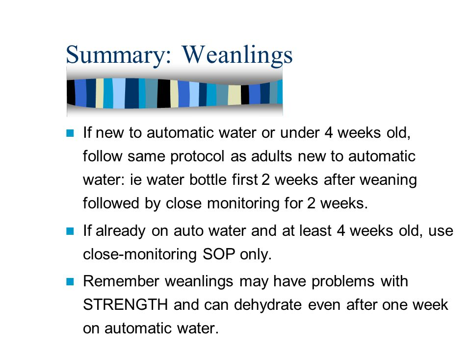 Summary: Weanlings If new to automatic water or under 4 weeks old, follow same protocol as adults new to automatic water: ie water bottle first 2 weeks after weaning followed by close monitoring for 2 weeks.