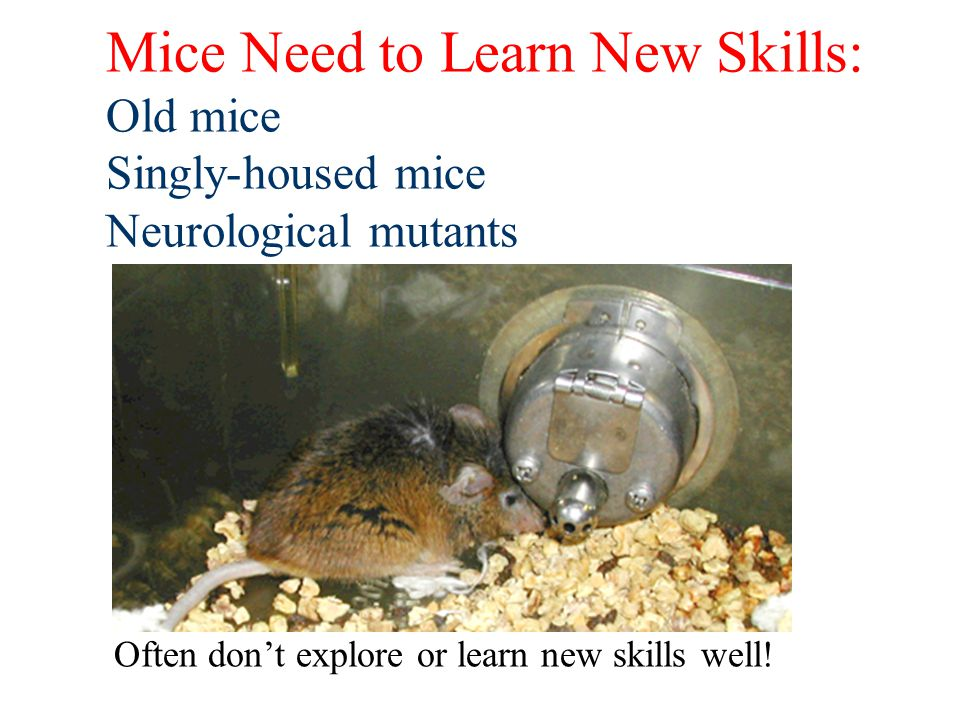 Mice Need to Learn New Skills: Old mice Singly-housed mice Neurological mutants Often dont explore or learn new skills well!