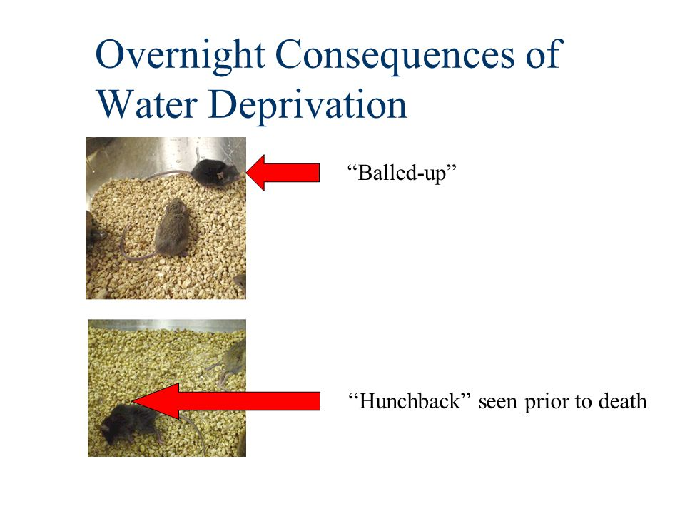 Overnight Consequences of Water Deprivation Balled-up Hunchback seen prior to death