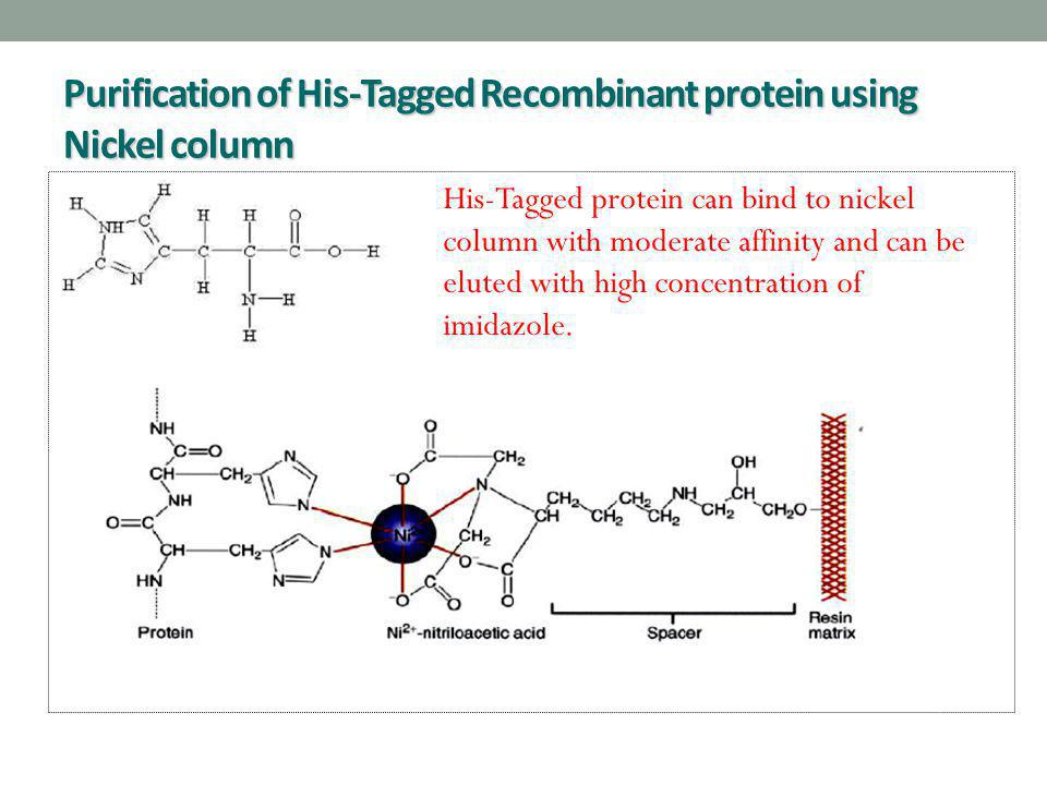 Purification of His-Tagged Recombinant protein using Nickel column His-Tagged protein can bind to nickel column with moderate affinity and can be elut