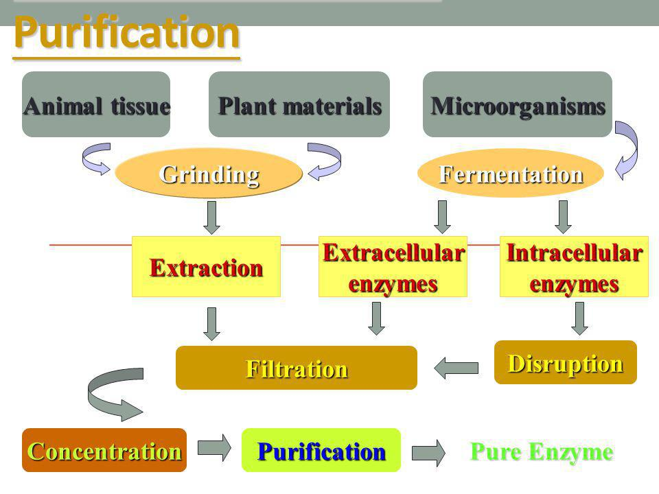General Flow Chart of Purification Animal tissue Plant materials Microorganisms ExtracellularenzymesIntracellularenzymes Disruption Filtration Concent