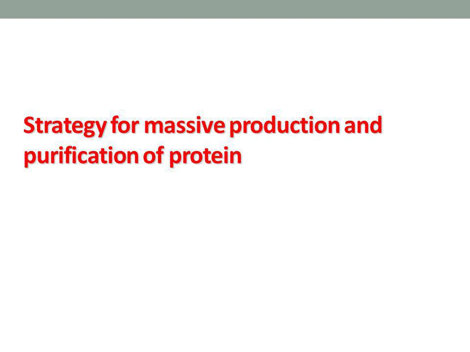Strategy for massive production and purification of protein