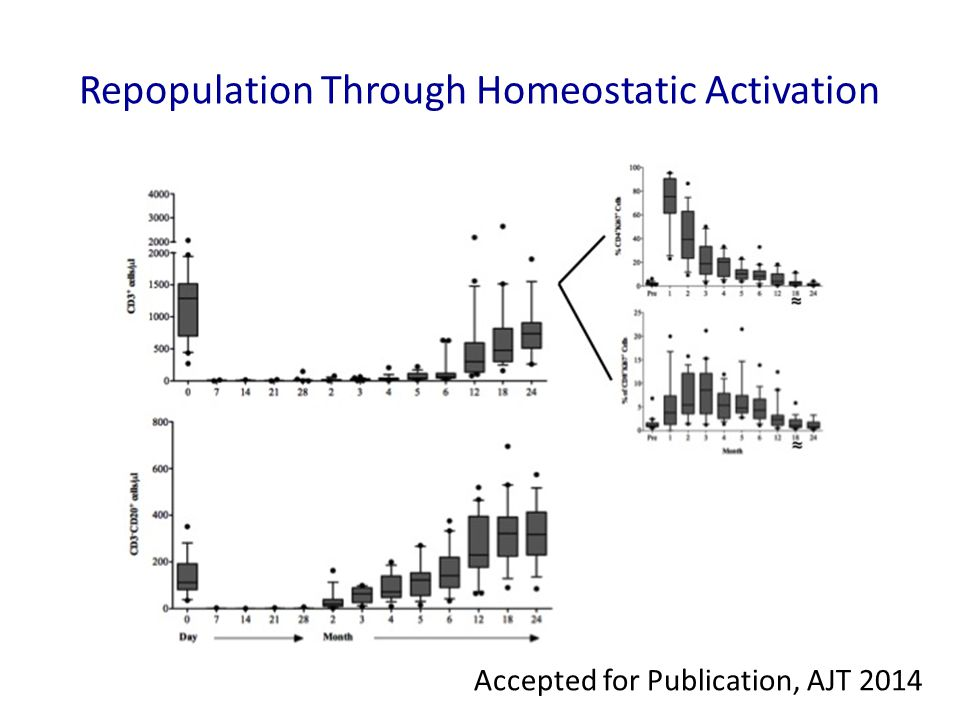 Repopulation Through Homeostatic Activation Accepted for Publication, AJT 2014