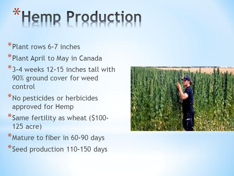 * Plant rows 6-7 inches * Plant April to May in Canada * 3-4 weeks 12-15 inches tall with 90% ground cover for weed control * No pesticides or herbicides approved for Hemp * Same fertility as wheat ($100- 125 acre) * Mature to fiber in 60-90 days * Seed production 110-150 days