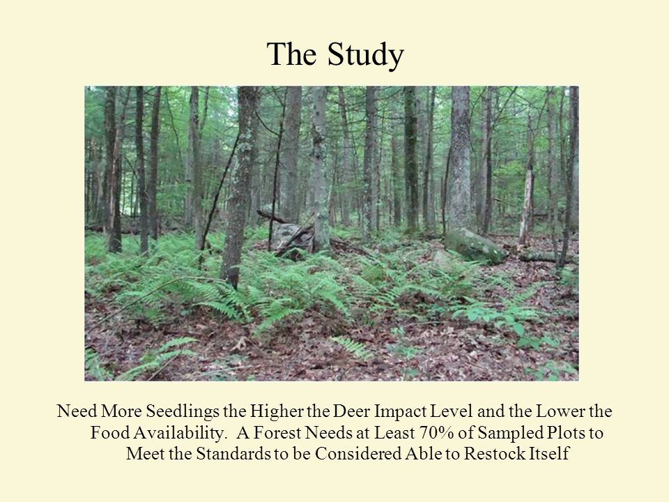 The Study Need More Seedlings the Higher the Deer Impact Level and the Lower the Food Availability.