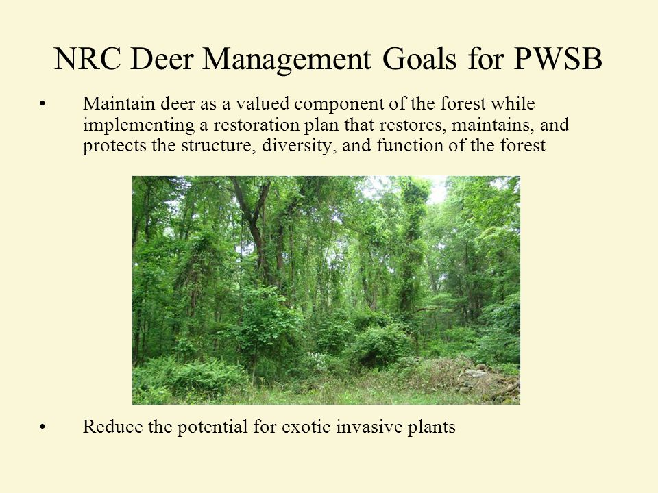 NRC Deer Management Goals for PWSB Maintain deer as a valued component of the forest while implementing a restoration plan that restores, maintains, and protects the structure, diversity, and function of the forest Reduce the potential for exotic invasive plants
