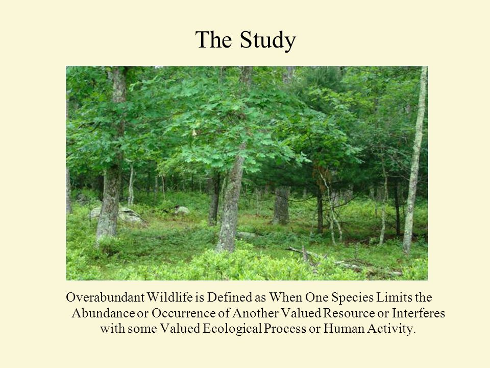 The Study Overabundant Wildlife is Defined as When One Species Limits the Abundance or Occurrence of Another Valued Resource or Interferes with some Valued Ecological Process or Human Activity.