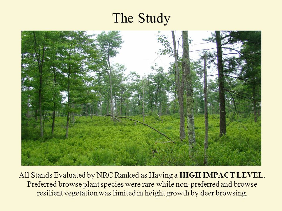 The Study All Stands Evaluated by NRC Ranked as Having a HIGH IMPACT LEVEL.