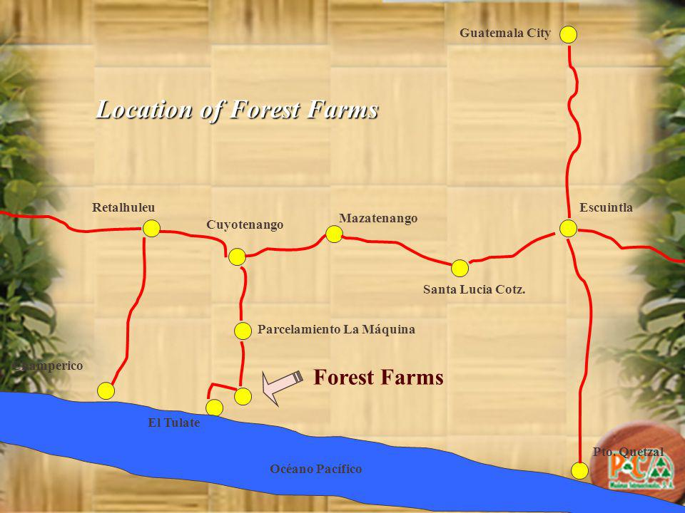 Guatemala City Forest Farms Parcelamiento La Máquina Escuintla Santa Lucia Cotz.