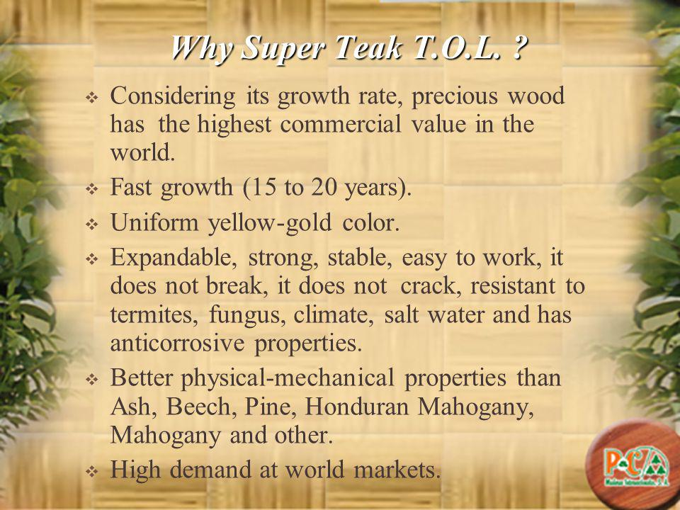 Why Super Teak T.O.L. ? Considering its growth rate, precious wood has the highest commercial value in the world. Fast growth (15 to 20 years). Unifor