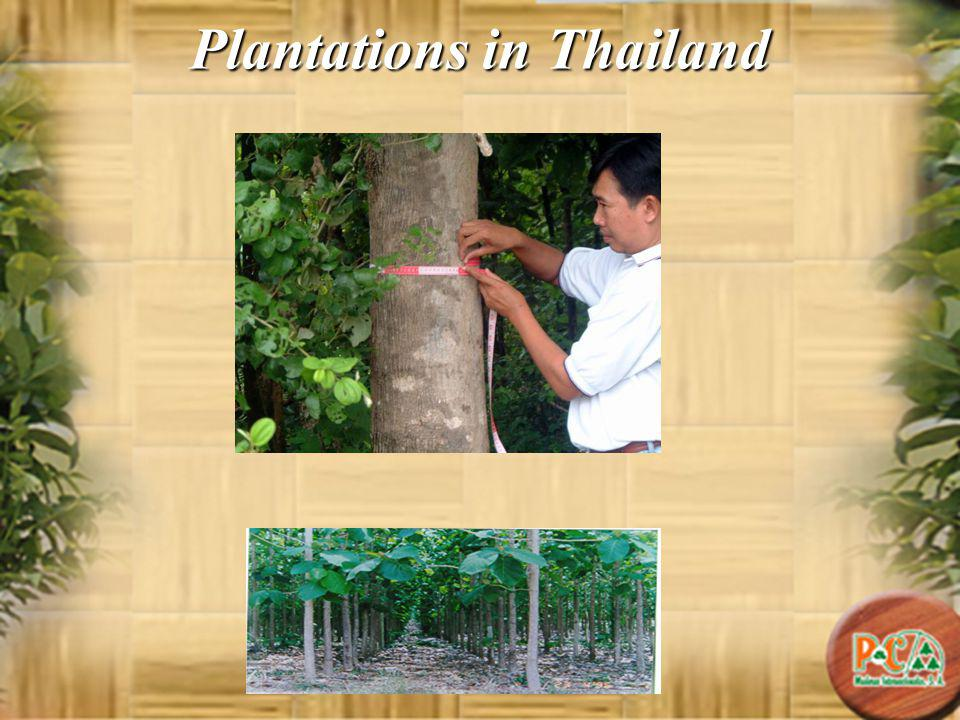 Plantations in Thailand