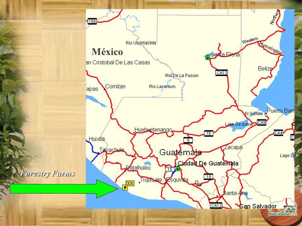 Guarantee P&C Maderas Internacionales S.A.will provide a Back Up plantation of Super Teak TOL.