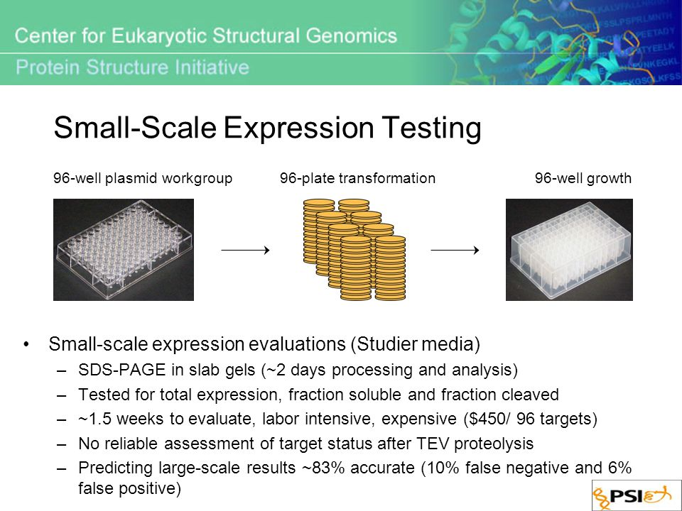 Small-Scale Expression Testing Small-scale expression evaluations (Studier media) –SDS-PAGE in slab gels (~2 days processing and analysis) –Tested for