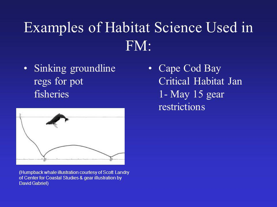 Examples of Habitat Science Used in FM: Sinking groundline regs for pot fisheries (Humpback whale illustration courtesy of Scott Landry of Center for Coastal Studies & gear illustration by David Gabriel) Cape Cod Bay Critical Habitat Jan 1- May 15 gear restrictions