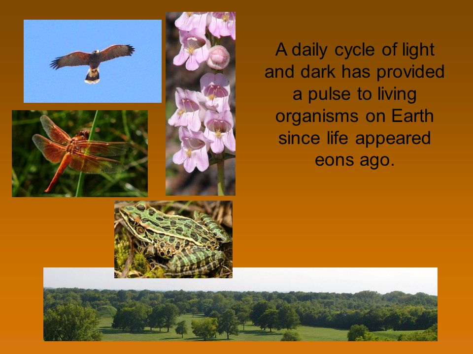 A daily cycle of light and dark has provided a pulse to living organisms on Earth since life appeared eons ago.