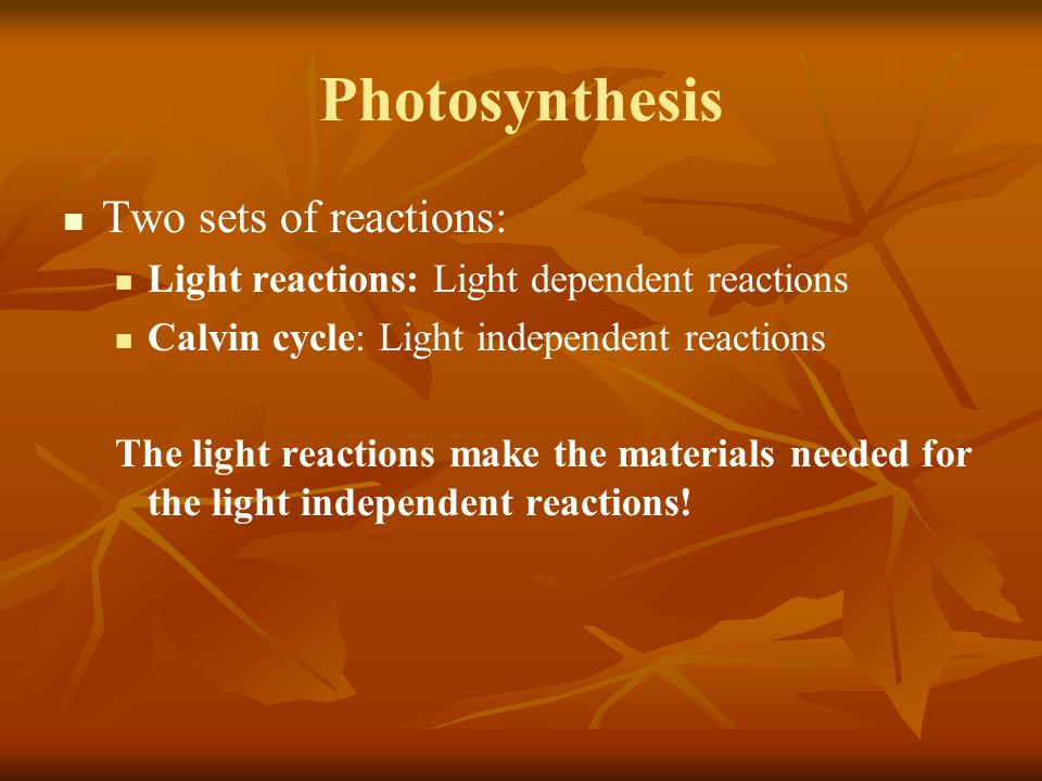 Photosynthesis Two sets of reactions: Light reactions: Light dependent reactions Calvin cycle: Light independent reactions The light reactions make th