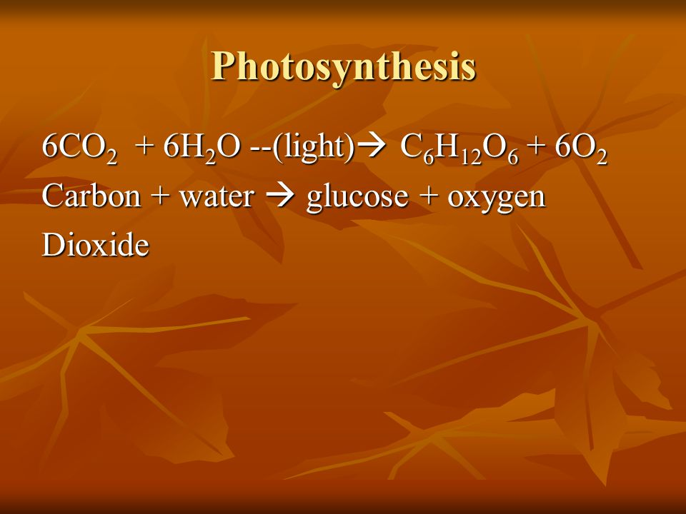 Photosynthesis 6CO 2 + 6H 2 O --(light) C 6 H 12 O 6 + 6O 2 Carbon + water glucose + oxygen Dioxide