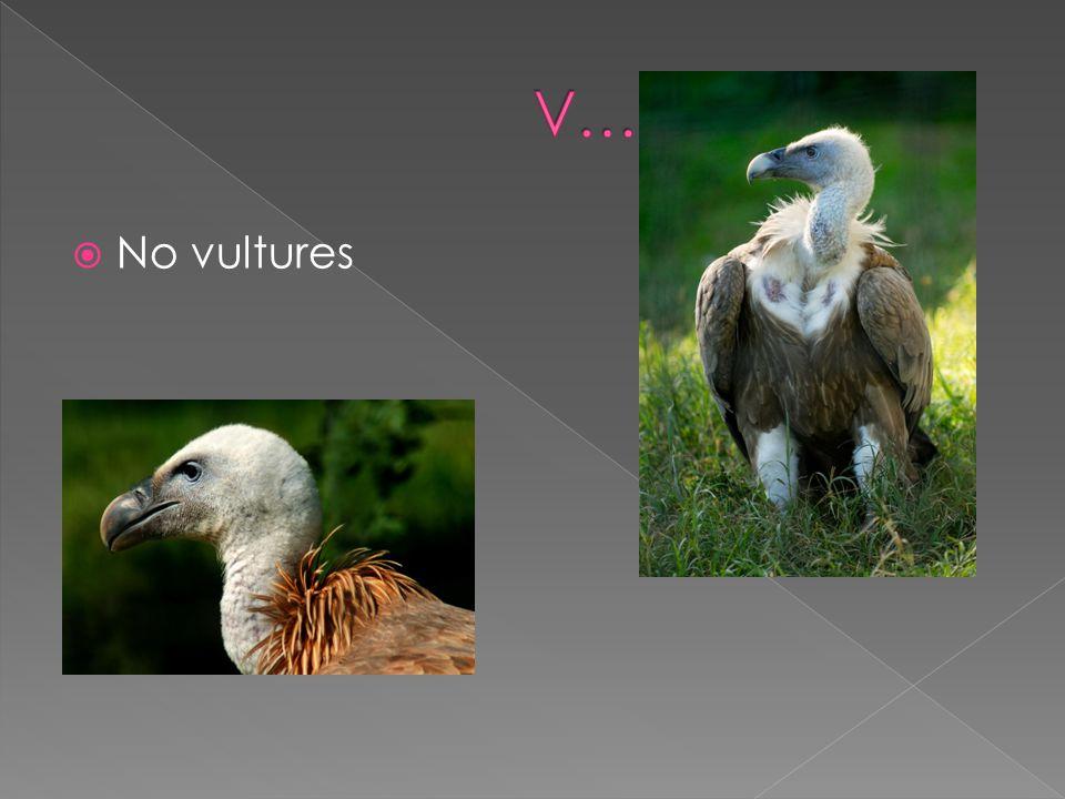 No vultures