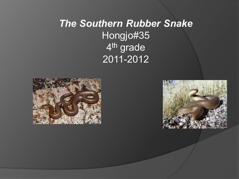 The Southern Rubber Snake Hongjo#35 4 th grade 2011-2012