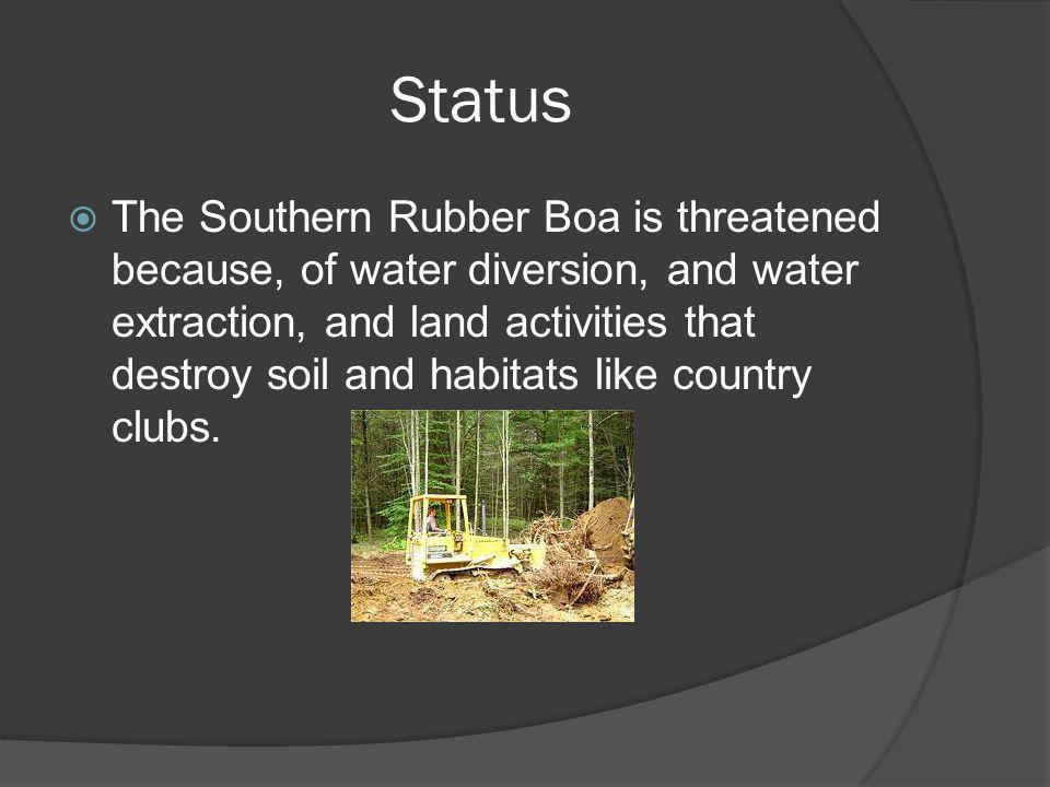 Status The Southern Rubber Boa is threatened because, of water diversion, and water extraction, and land activities that destroy soil and habitats lik