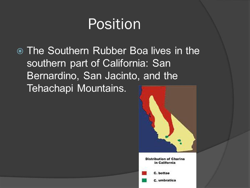 Position The Southern Rubber Boa lives in the southern part of California: San Bernardino, San Jacinto, and the Tehachapi Mountains.
