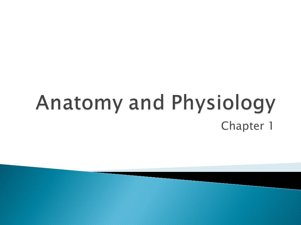 Anatomy is the study of the structure and shape of the body and body parts and their relationships to one another.