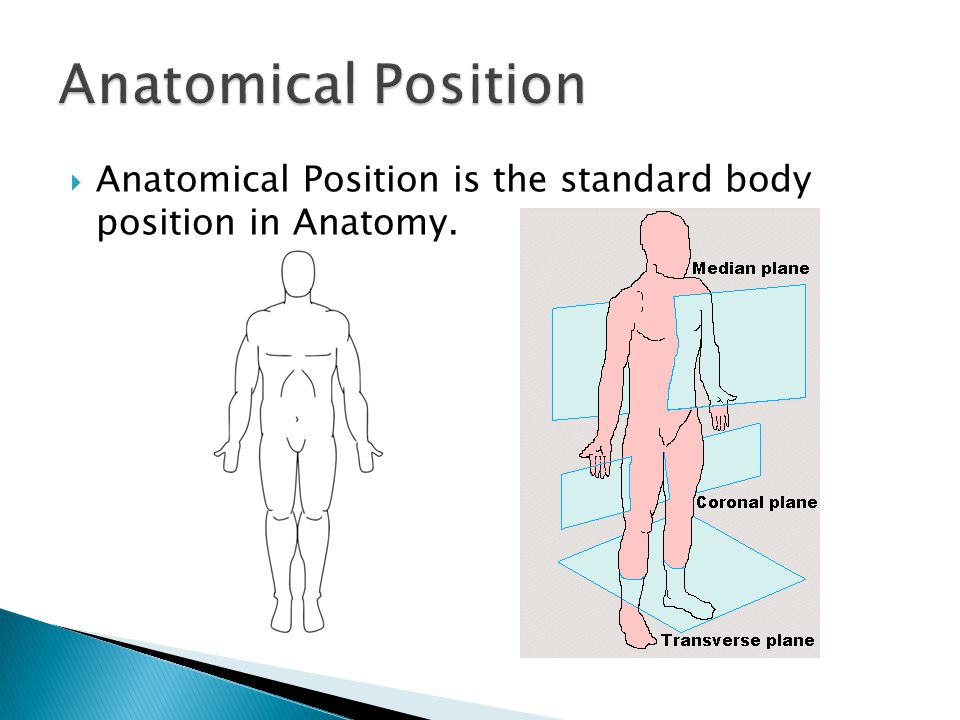 Anatomical Position is the standard body position in Anatomy.
