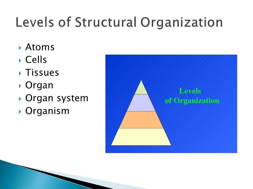 1.Nervous system 2. Digestive system 3. Skeletal system 4.