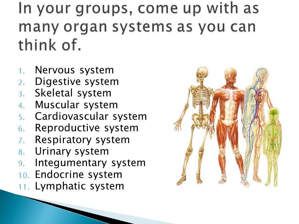 1. Nervous system 2. Digestive system 3. Skeletal system 4. Muscular system 5. Cardiovascular system 6. Reproductive system 7. Respiratory system 8. U