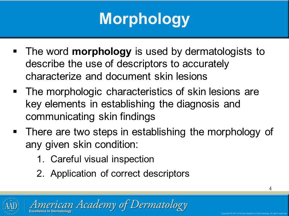Morphology The word morphology is used by dermatologists to describe the use of descriptors to accurately characterize and document skin lesions The m