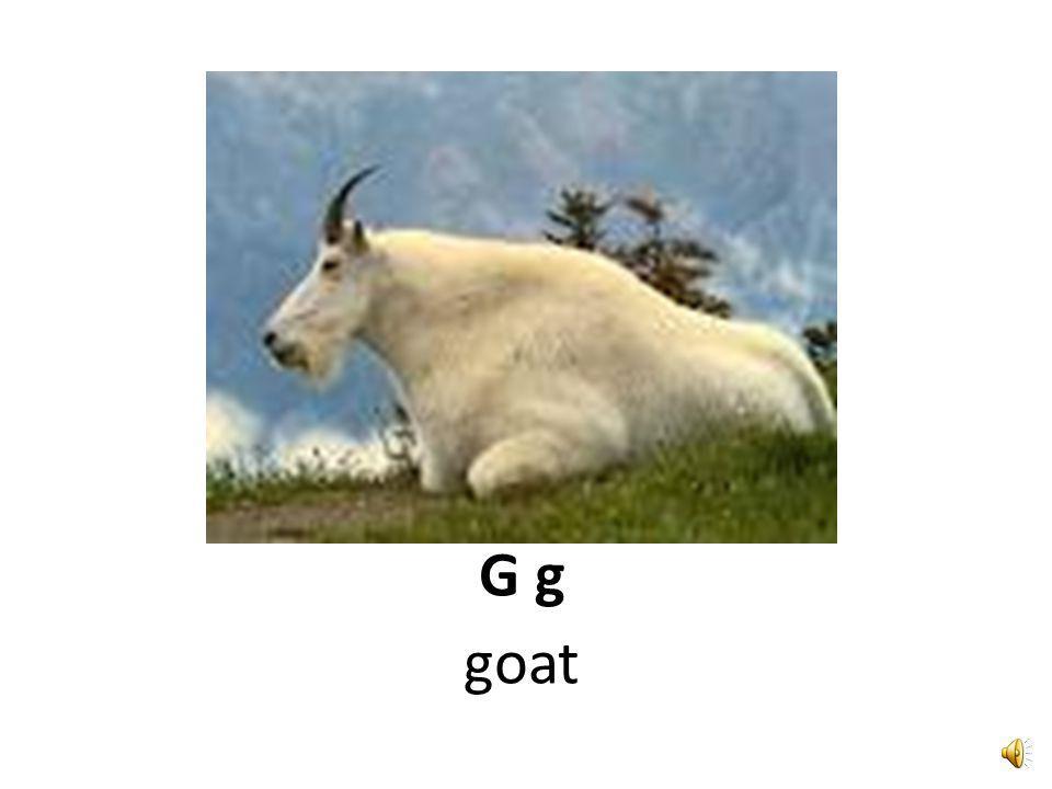 G g giant