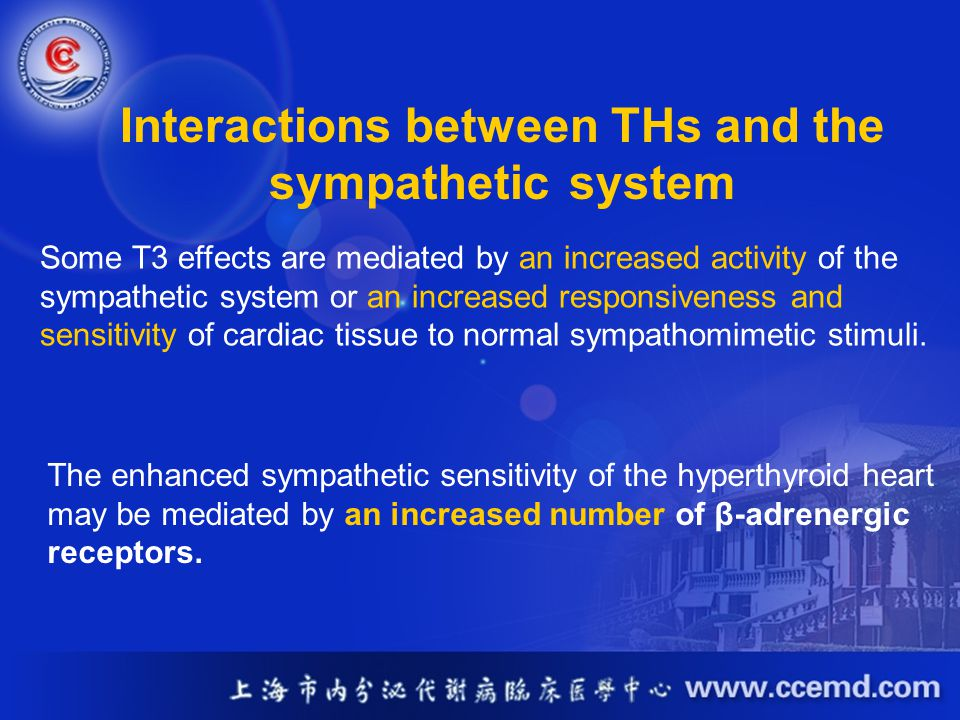 Interactions between THs and the sympathetic system Some T3 effects are mediated by an increased activity of the sympathetic system or an increased re