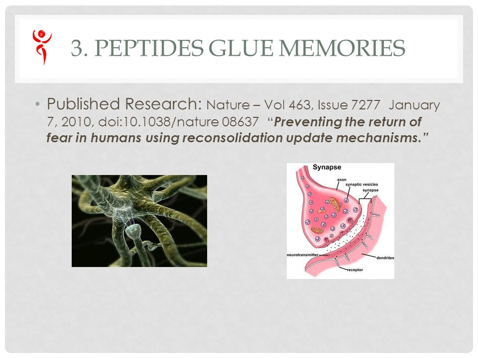 3. PEPTIDES GLUE MEMORIES Published Research: Nature – Vol 463, Issue 7277 January 7, 2010, doi:10.1038/nature 08637 Preventing the return of fear in