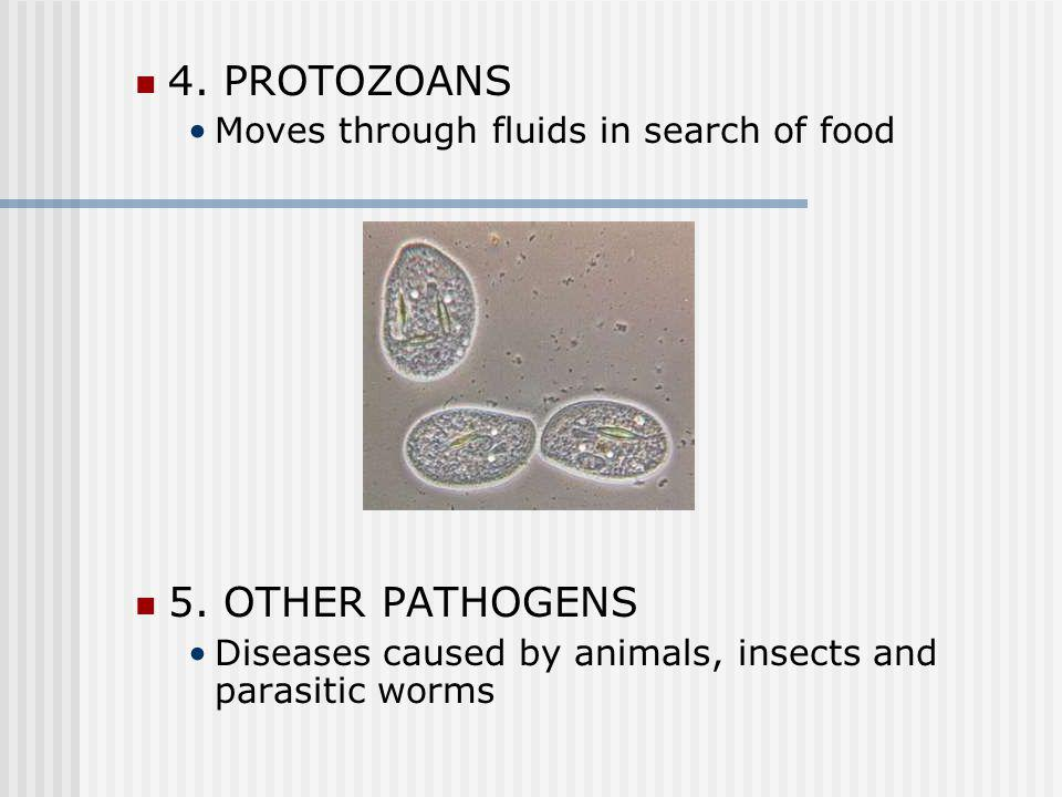 3. FUNGI Simple organisms related to mold Like warm, dark, and moist areas