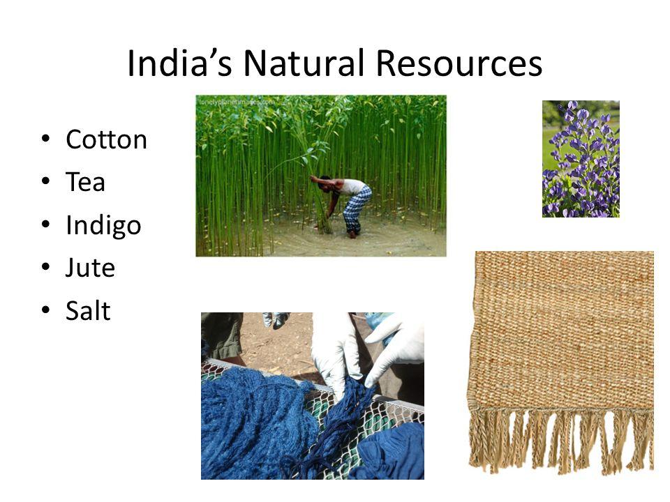 Indias Natural Resources Cotton Tea Indigo Jute Salt