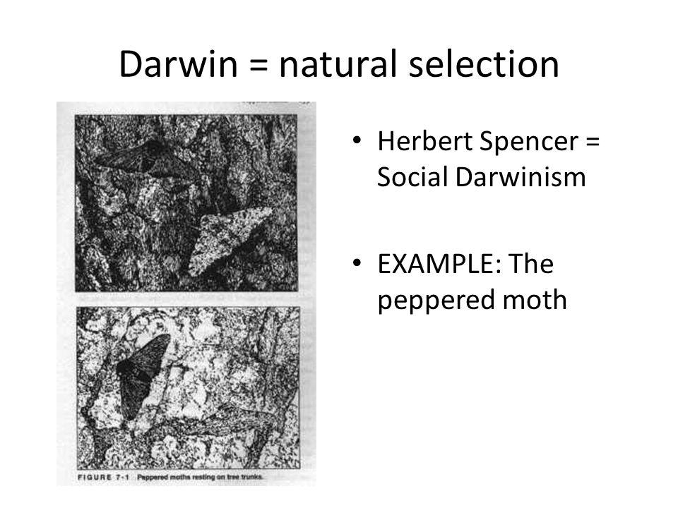 Darwin = natural selection Herbert Spencer = Social Darwinism EXAMPLE: The peppered moth