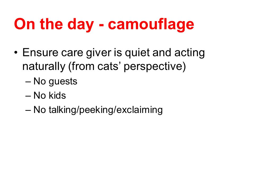 On the day - camouflage Ensure care giver is quiet and acting naturally (from cats perspective) –No guests –No kids –No talking/peeking/exclaiming