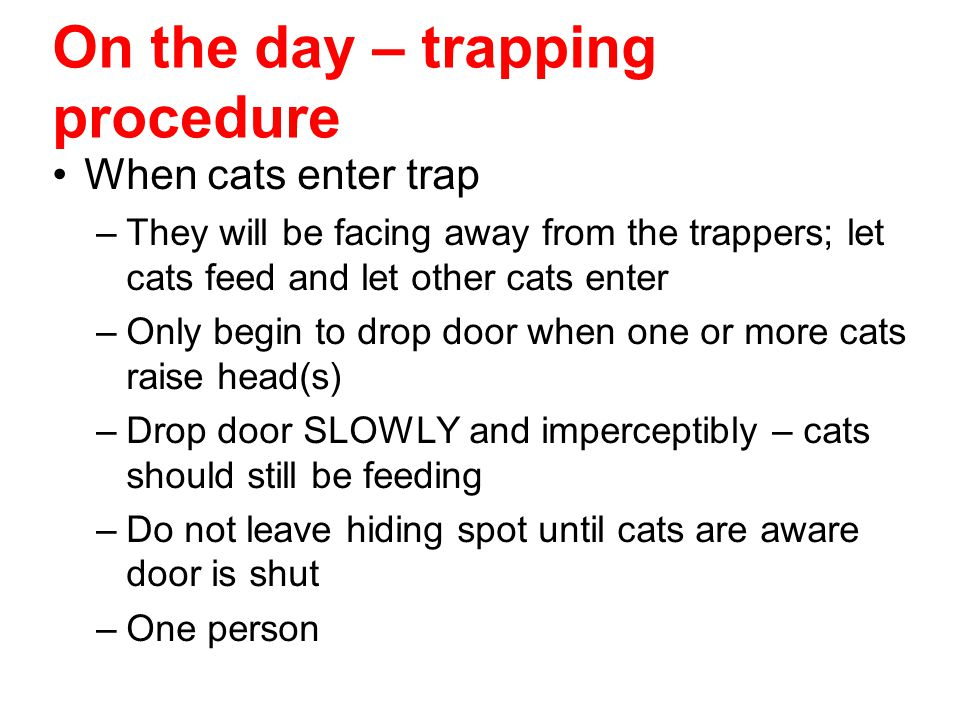 On the day – trapping procedure When cats enter trap –They will be facing away from the trappers; let cats feed and let other cats enter –Only begin t