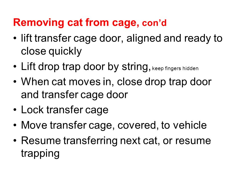 Removing cat from cage, cond lift transfer cage door, aligned and ready to close quickly Lift drop trap door by string, keep fingers hidden When cat m