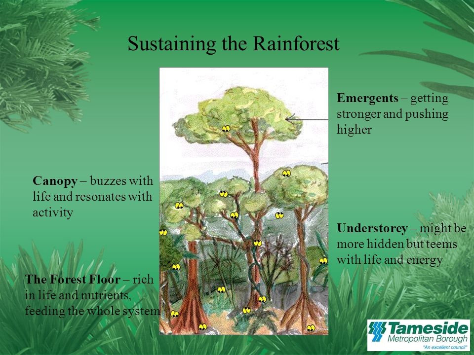 The Forest Floor – rich in life and nutrients, feeding the whole system Canopy – buzzes with life and resonates with activity Understorey – might be more hidden but teems with life and energy Emergents – getting stronger and pushing higher Sustaining the Rainforest