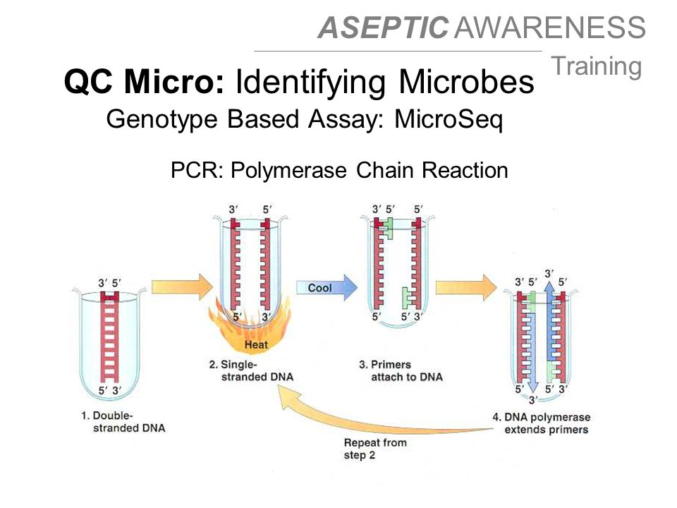 ASEPTIC AWARENESS Training QC Micro: Identifying Microbes Genotype Based Assay: MicroSeq PCR: Polymerase Chain Reaction