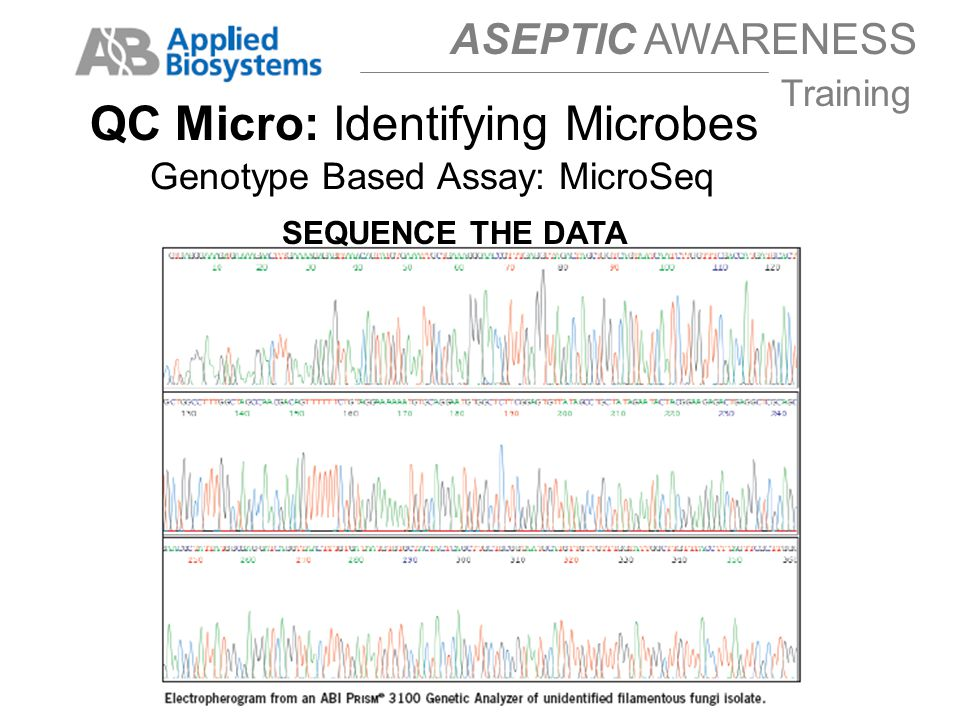 ASEPTIC AWARENESS Training SEQUENCE THE DATA QC Micro: Identifying Microbes Genotype Based Assay: MicroSeq