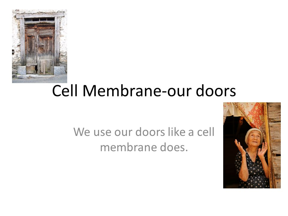 Cell Membrane-our doors We use our doors like a cell membrane does.