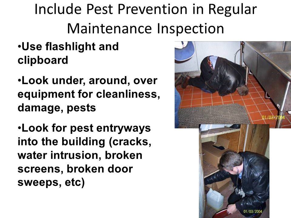 Include Pest Prevention in Regular Maintenance Inspection Use flashlight and clipboard Look under, around, over equipment for cleanliness, damage, pests Look for pest entryways into the building (cracks, water intrusion, broken screens, broken door sweeps, etc)