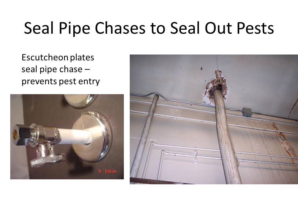 Seal Pipe Chases to Seal Out Pests Escutcheon plates seal pipe chase – prevents pest entry