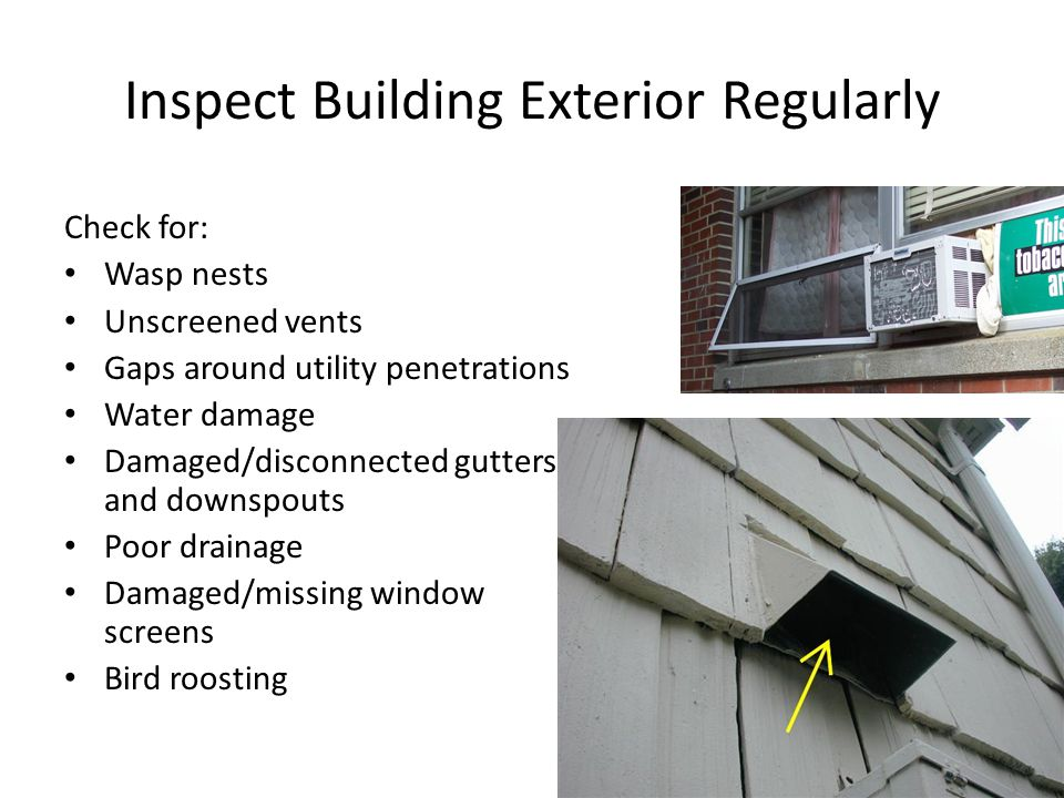 Inspect Building Exterior Regularly Check for: Wasp nests Unscreened vents Gaps around utility penetrations Water damage Damaged/disconnected gutters and downspouts Poor drainage Damaged/missing window screens Bird roosting
